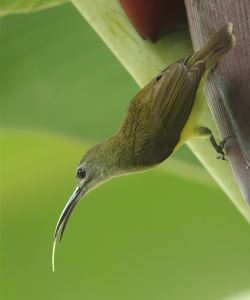 Spiderhunter