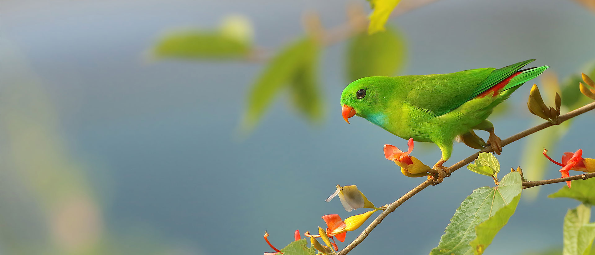 1/20th of the World's Birds are found in Goa