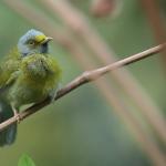 Goa | Birding Options | Day Trips