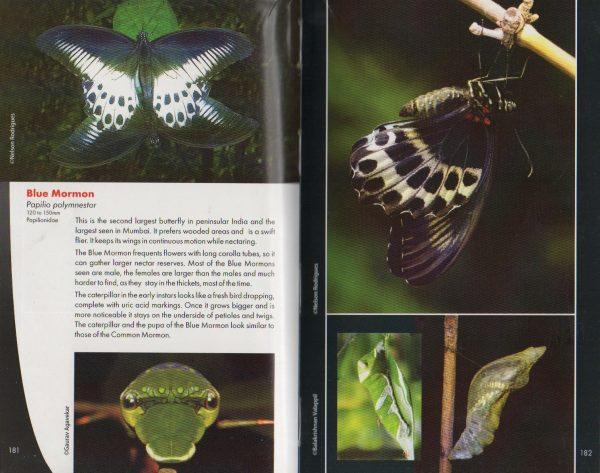 Nelson Rodrigues - Butterflies
